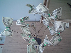 photo of a money tree